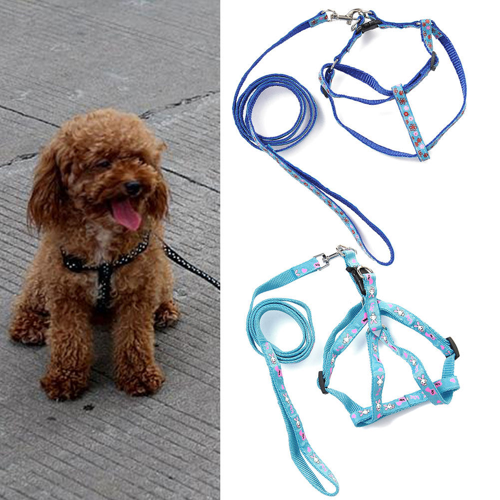 how to put a harness on a puppy